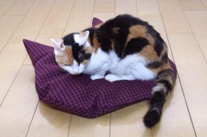 猫座布団とニャンコ