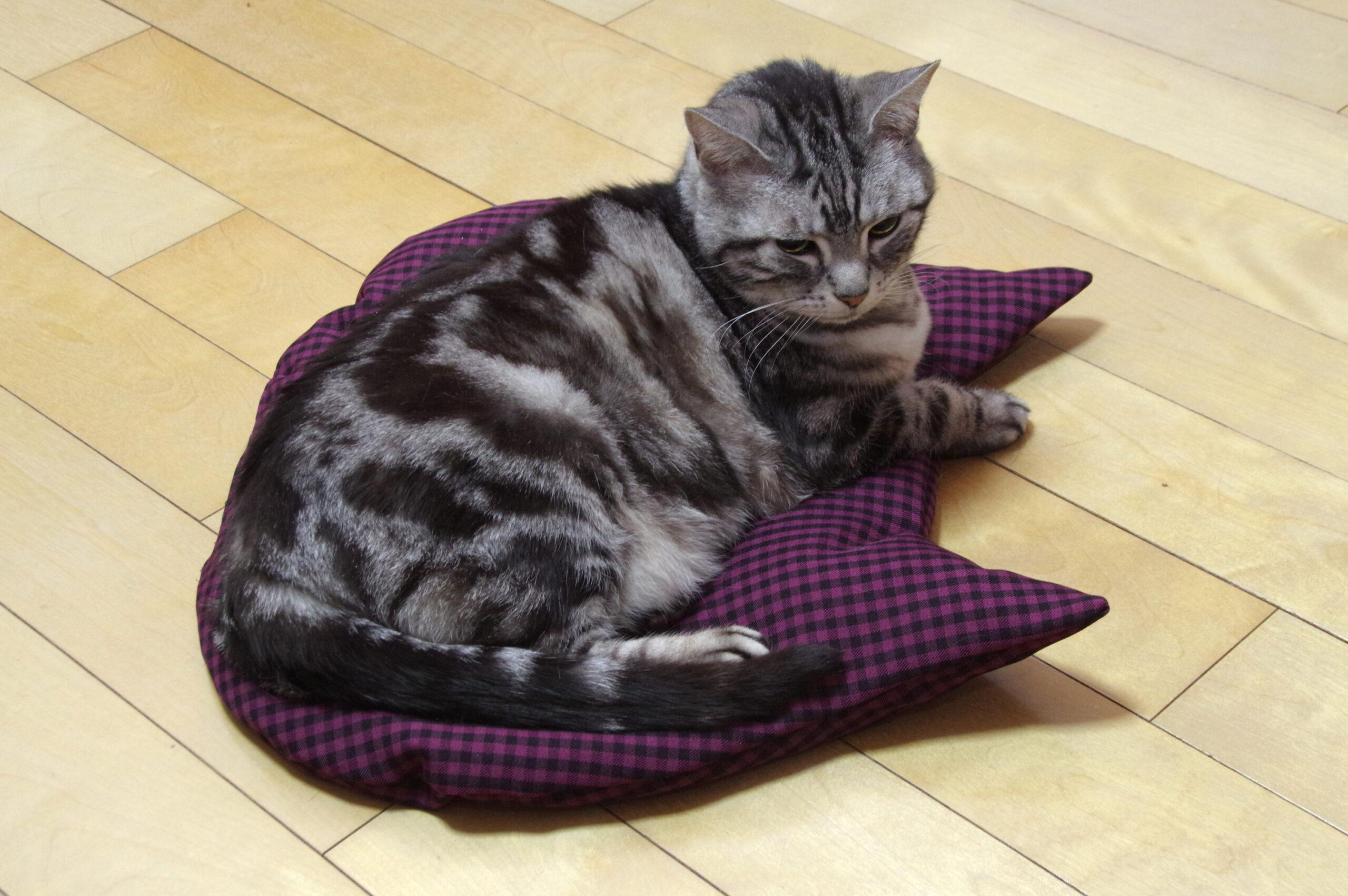 ネコ座布団の使用感