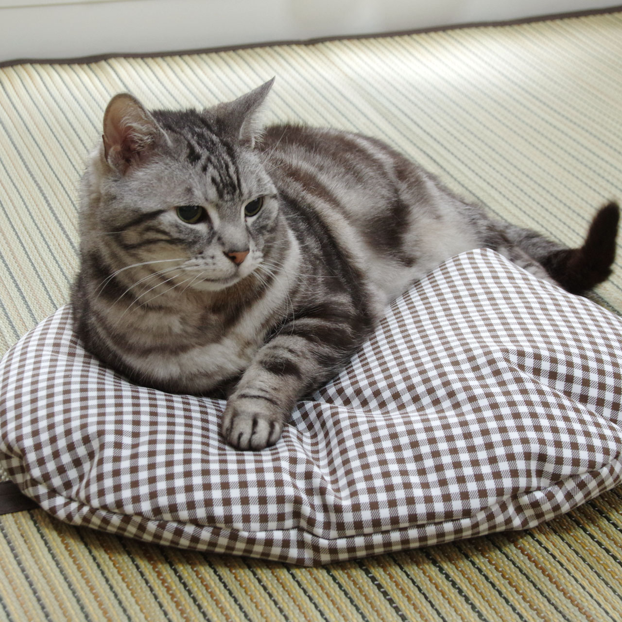 猫のしあわせ座布団:ブラウンの使用感