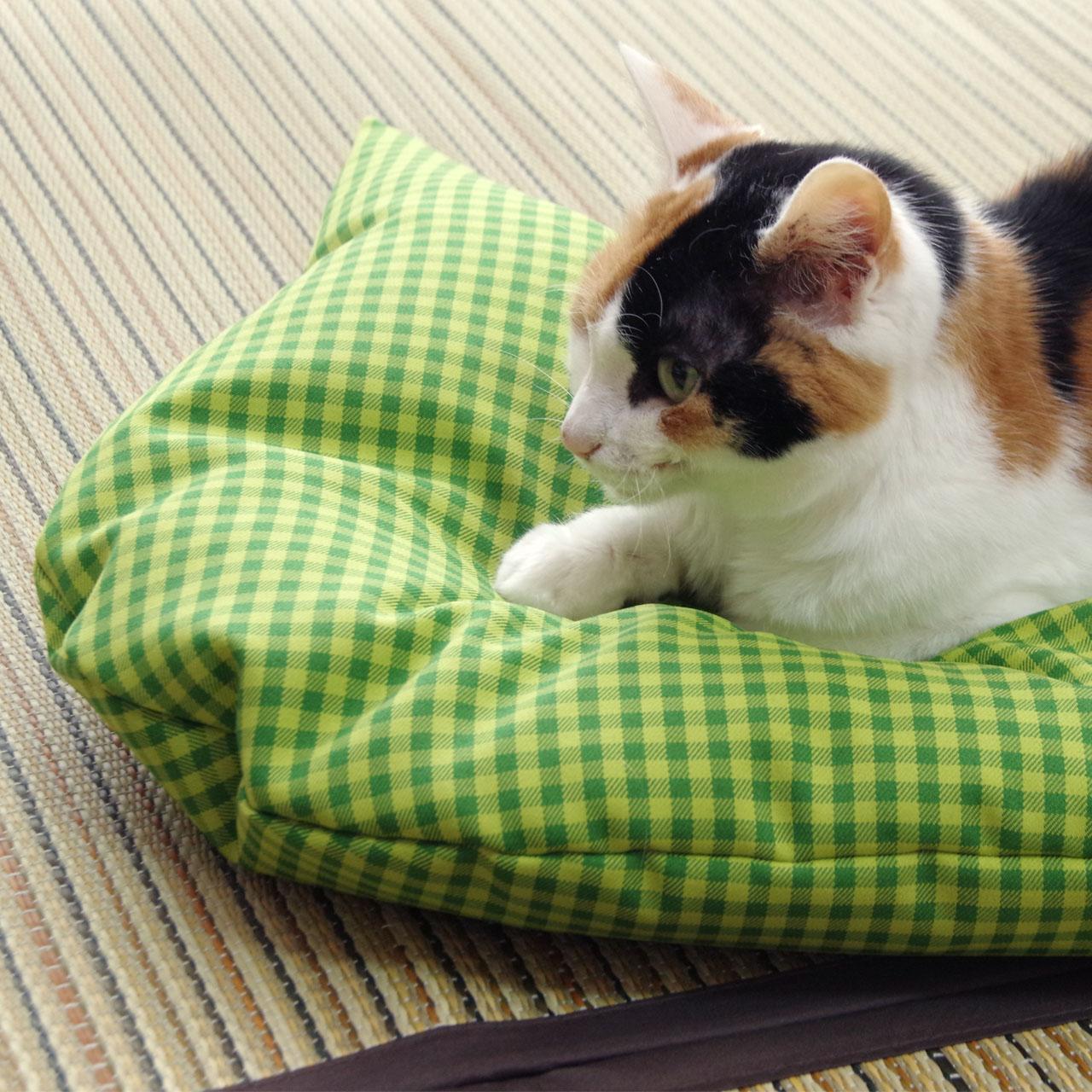 猫のしあわせ座布団:グリーンの使用感