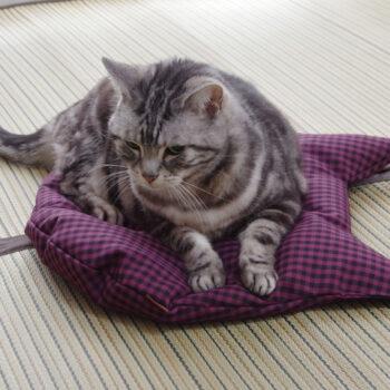 猫のしあわせ座布団:スミレチェック